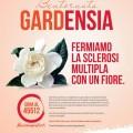 La gardensia Aism