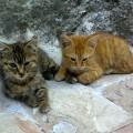 gatti miranda